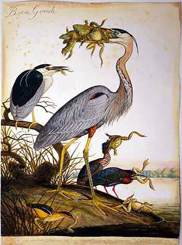 Walton-Ford-Frog-Birds2